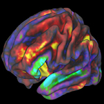 brain with colors